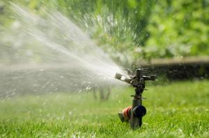 lawn-sprinkler-fine-cut-lawn-service