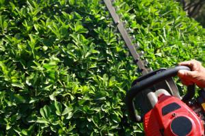 shrub-trimming-fine-cut-lawn-service